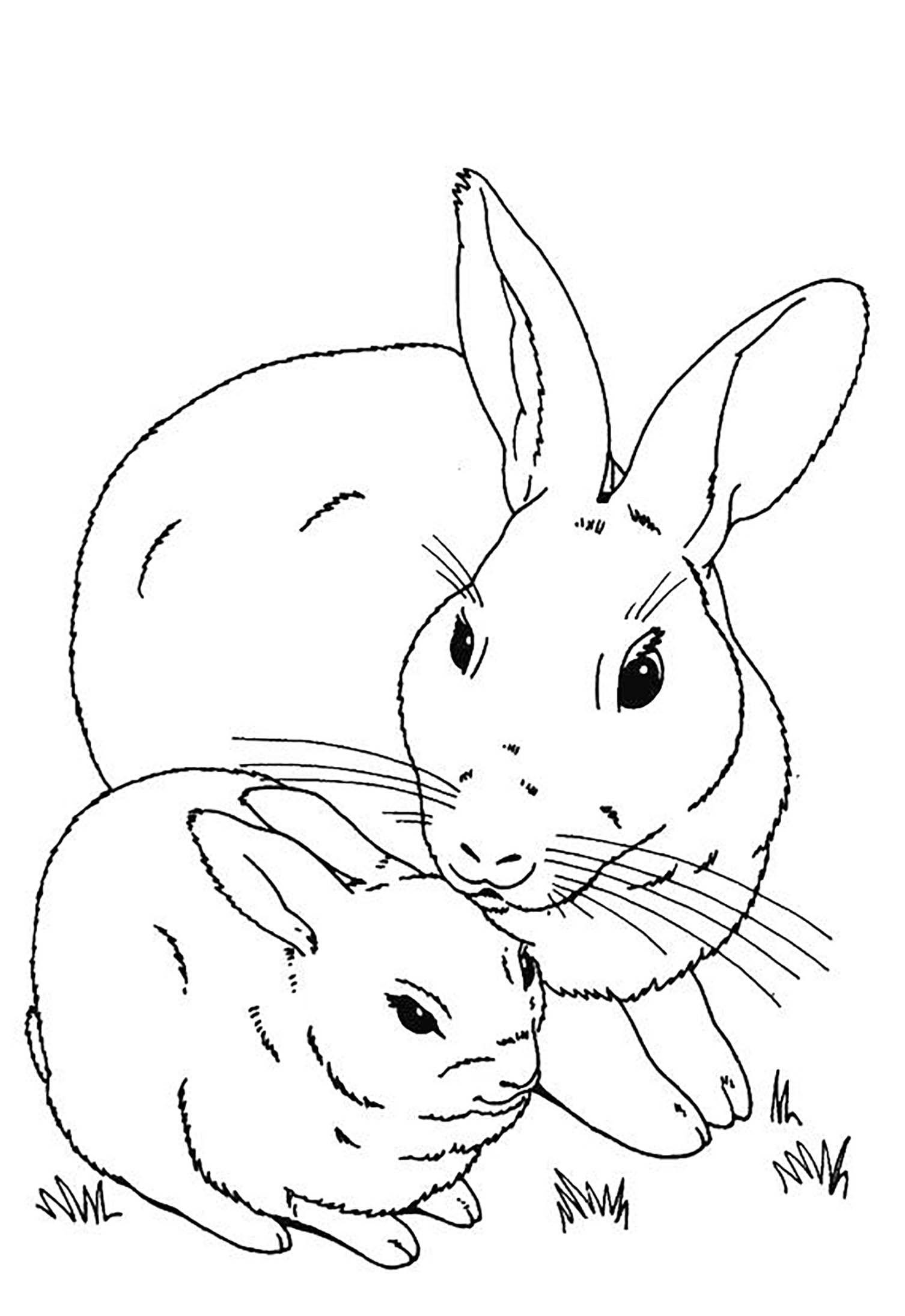 Rabbit To Color For Children Rabbit Kids Coloring Pages In 2021 Bunny Coloring Pages Coloring Pages Coloring For Kids