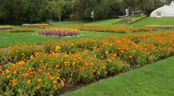 Best Places To See Spring Flowers In San Francisco