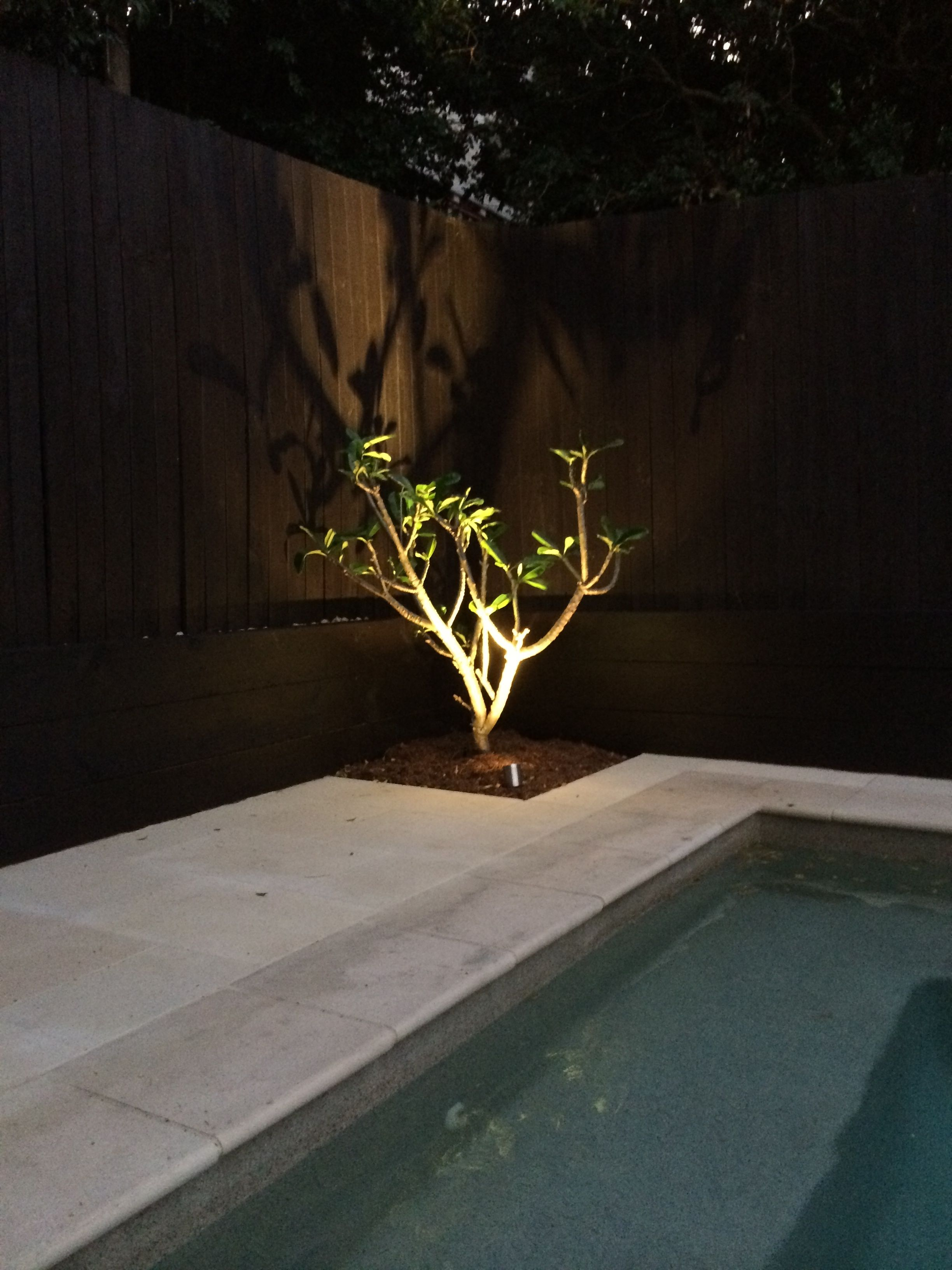 Stainless steel 'spike' garden light used to light up