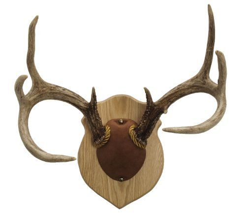 Pin by Chad Dunham on Crafty gift ideas | Antler mount ...