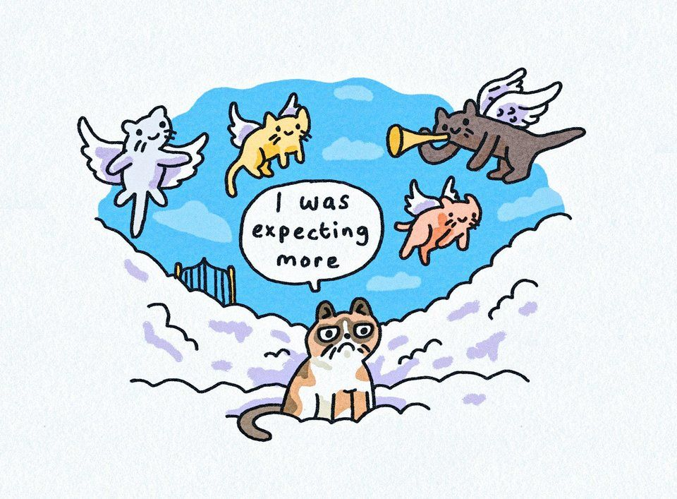 Rest in Grumpiness blog (With images) Grumpy cat