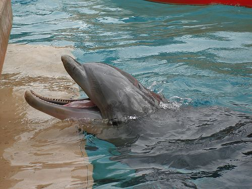 Where To Swim With Dolphins In Florida Best Places In Florida Florida Dolphins Florida