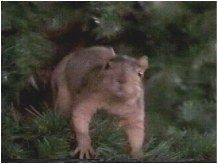 Christmas Vacation Squirrel.Pin By Beth Viers On Christmas Vacation Funny Movie