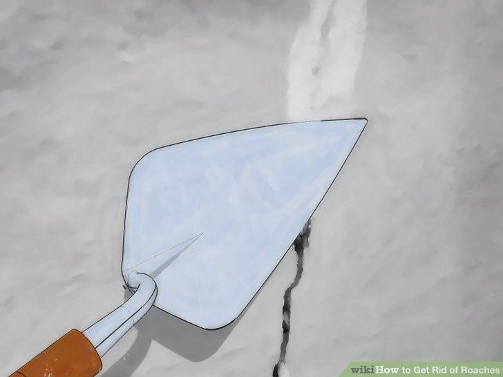 How to get rid of roaches in 2020 kill roaches home