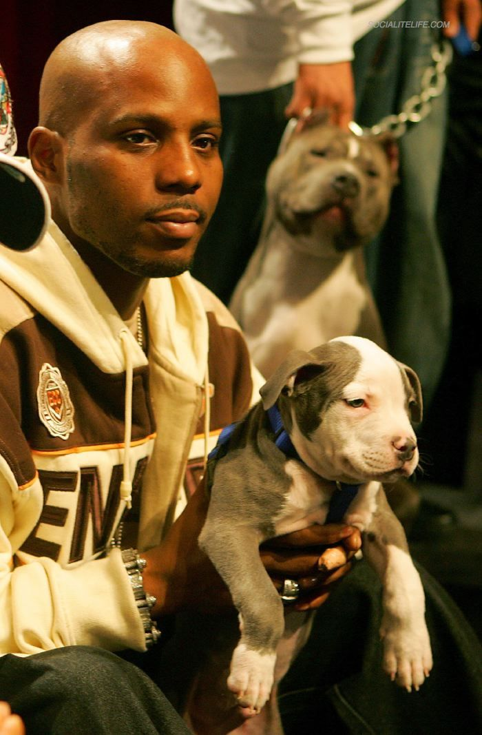 Cute Puppy Iphone Wallpaper This Picture Is Dmx With His Puppy Pit Bull Dmx Loved