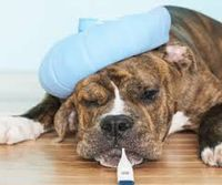 Summer Hazards and Your Pet