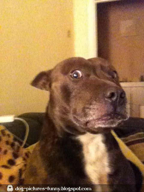 Shocked Dog Dog Pictures Dog Face Happy Animals