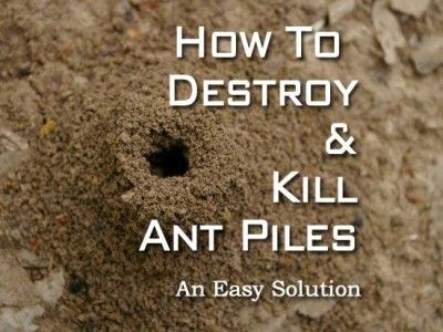 How to Destroy and Kill Ant Piles landscaping Pinterest Ants