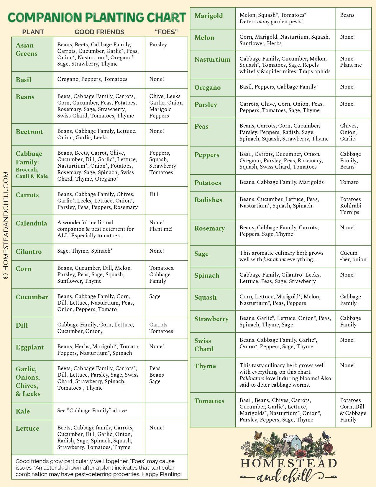 Companion Planting 101 (w/ Garden Companion Planting Chart) ~ Homestead and Chill#chart #chill #companion #garden #homestead #planting