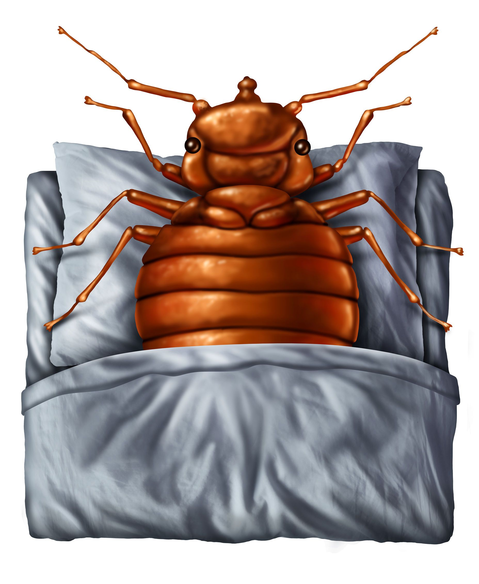 Can Bed Bugs Fly? Bed Bug Facts and Myths While bed bugs
