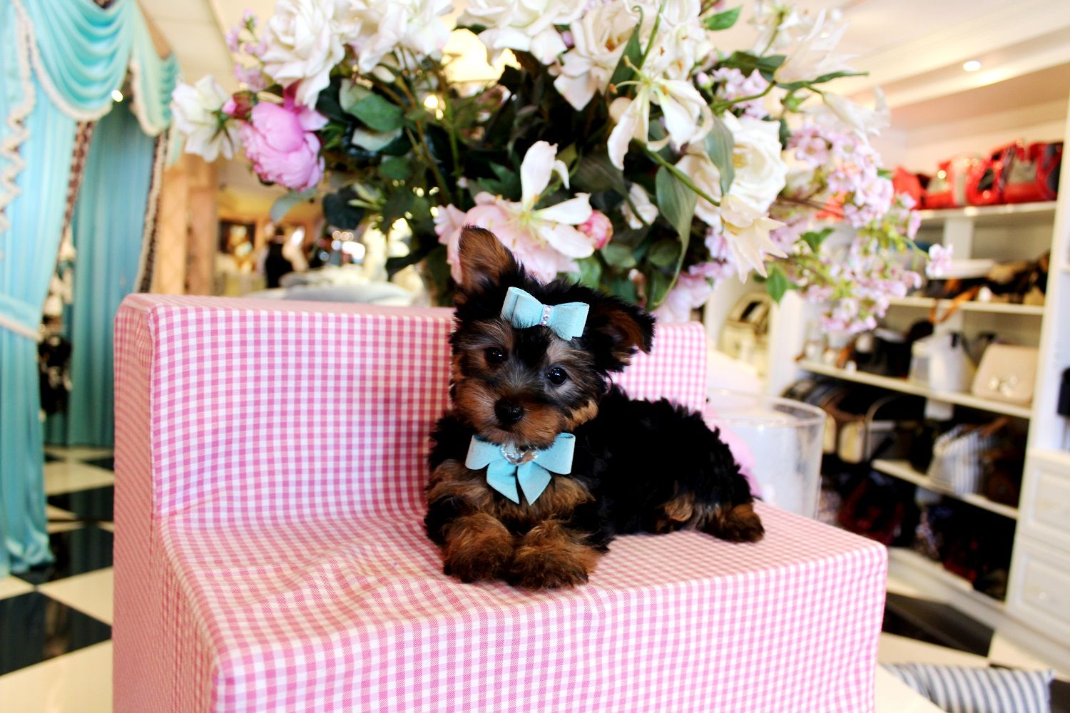 ♥♥♥ Teacup Yorkies!! ♥♥♥ Bring This Perfect Baby Home Today! Call 954-353-7864 www.TeacupPuppies... ♥ ♥ ♥ TeacupPuppiesStore - Teacup Puppies Store Tea Cup