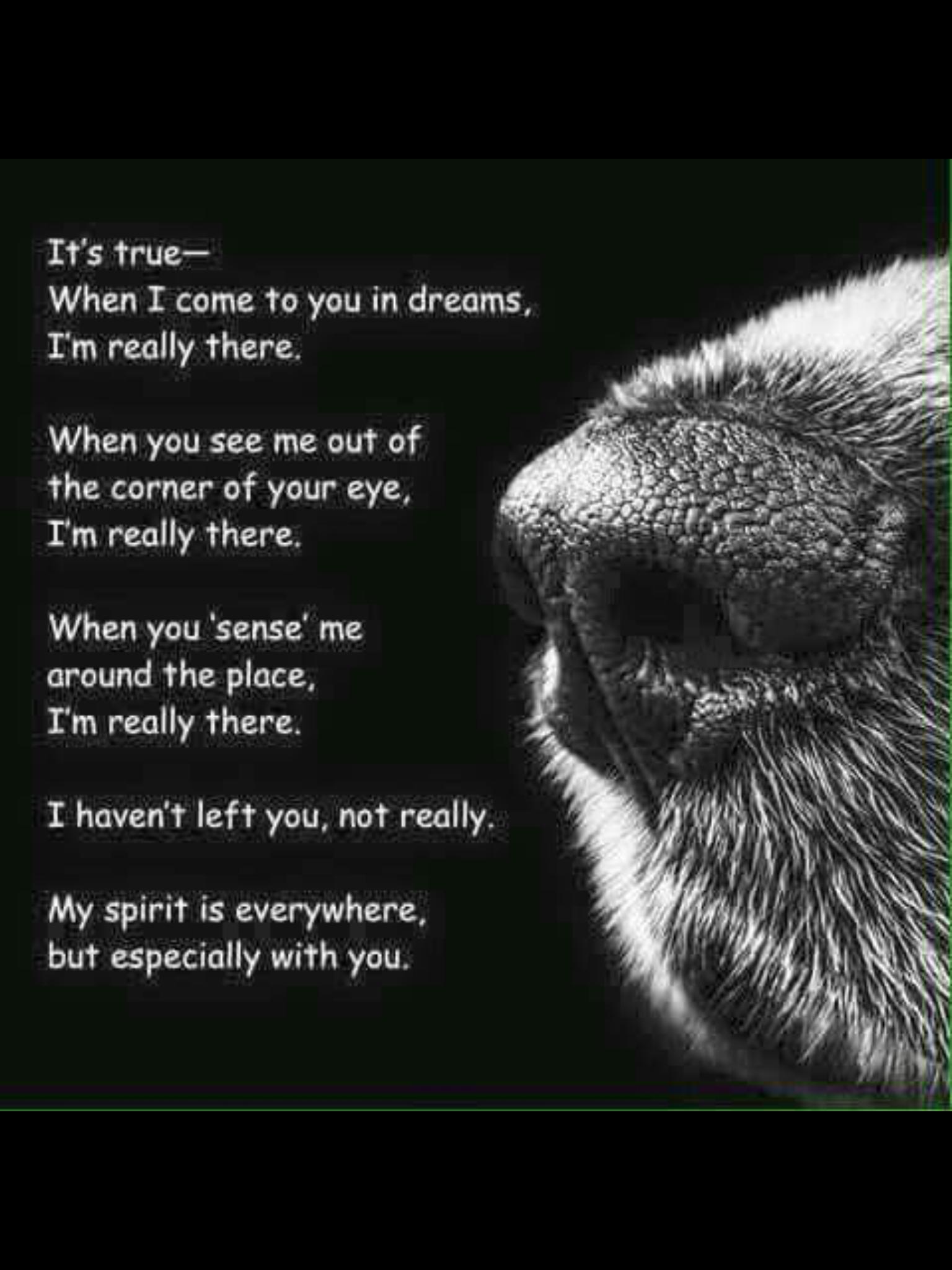 Dreams Dog Quotes Dog Poems Pet Remembrance