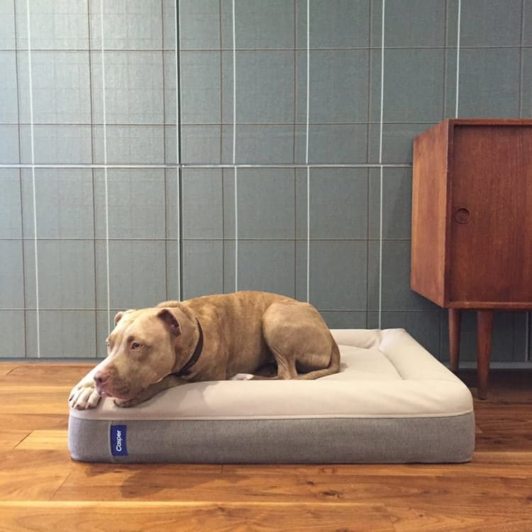 Casper Dog Mattress Elevated Dog Bed Mattress Dog Bed Memory Foam Dog Bed