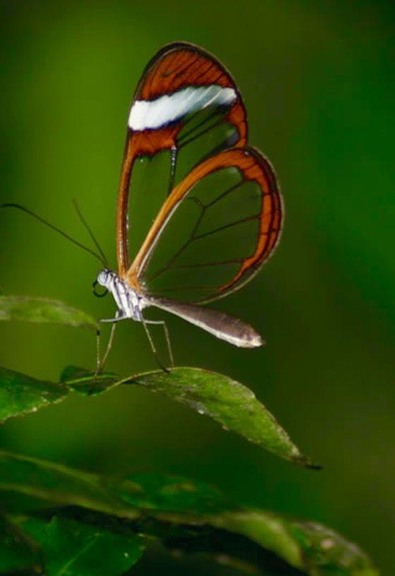 ป กพ นโดย Vanna Khumjalern ใน ผ เส อสวยๆ