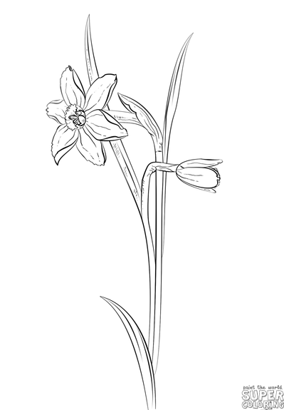 How to draw a narcissus step by step drawing tutorials warmup how to draw a daffodil flower step by step drawing tutorials for kids and beginners mightylinksfo