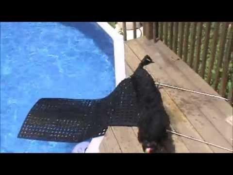 Diy Dog Ramp For Swimming Pool Youtube Pool