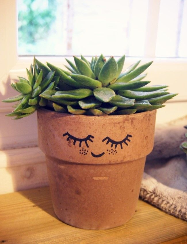 succulent with a face