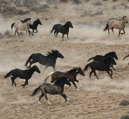 wildhorses4.jpg photo by deyeofbeautyl