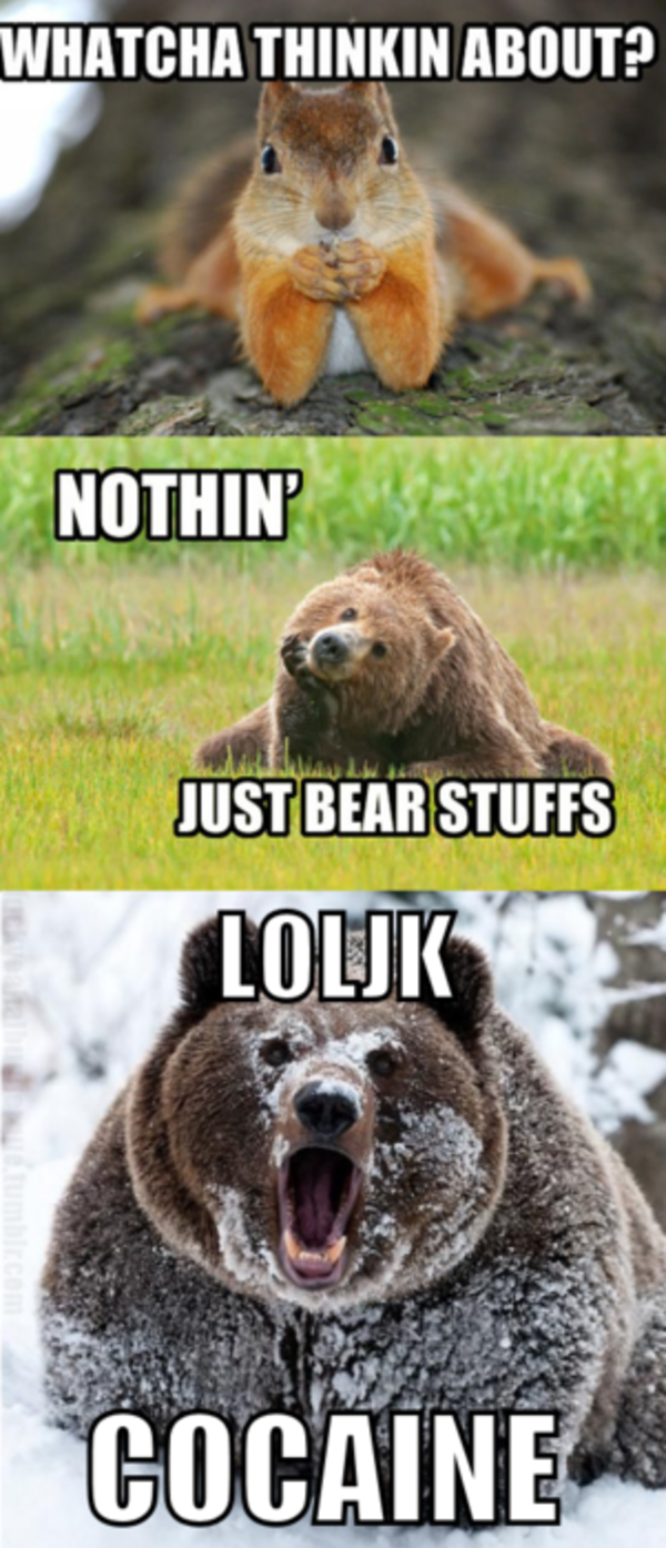 Whatcha Doin Bear Stuff Google Search Laugh Make Me Laugh Funny