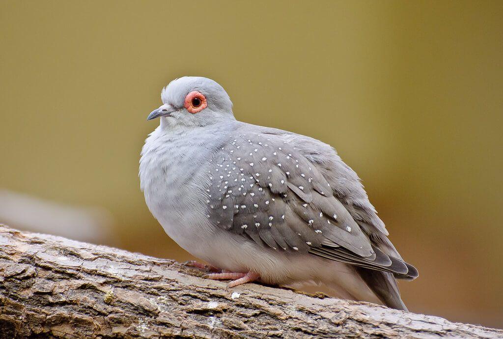 Gambar Burung Dara Merpati Dan Sejenisnya Alihamdan Zhivotnye Pticy Ptichki