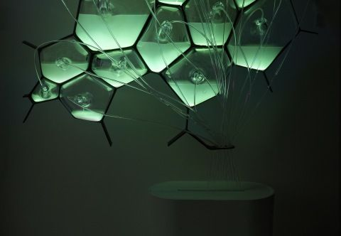 Eco-Design: Bio-Light your home with bioluminescent bacteria! #ecodesign http://blog.bloomtrigger.com/2012/04/28/eco-design-bio-light-your-home-with-bioluminescent-bacteria/
