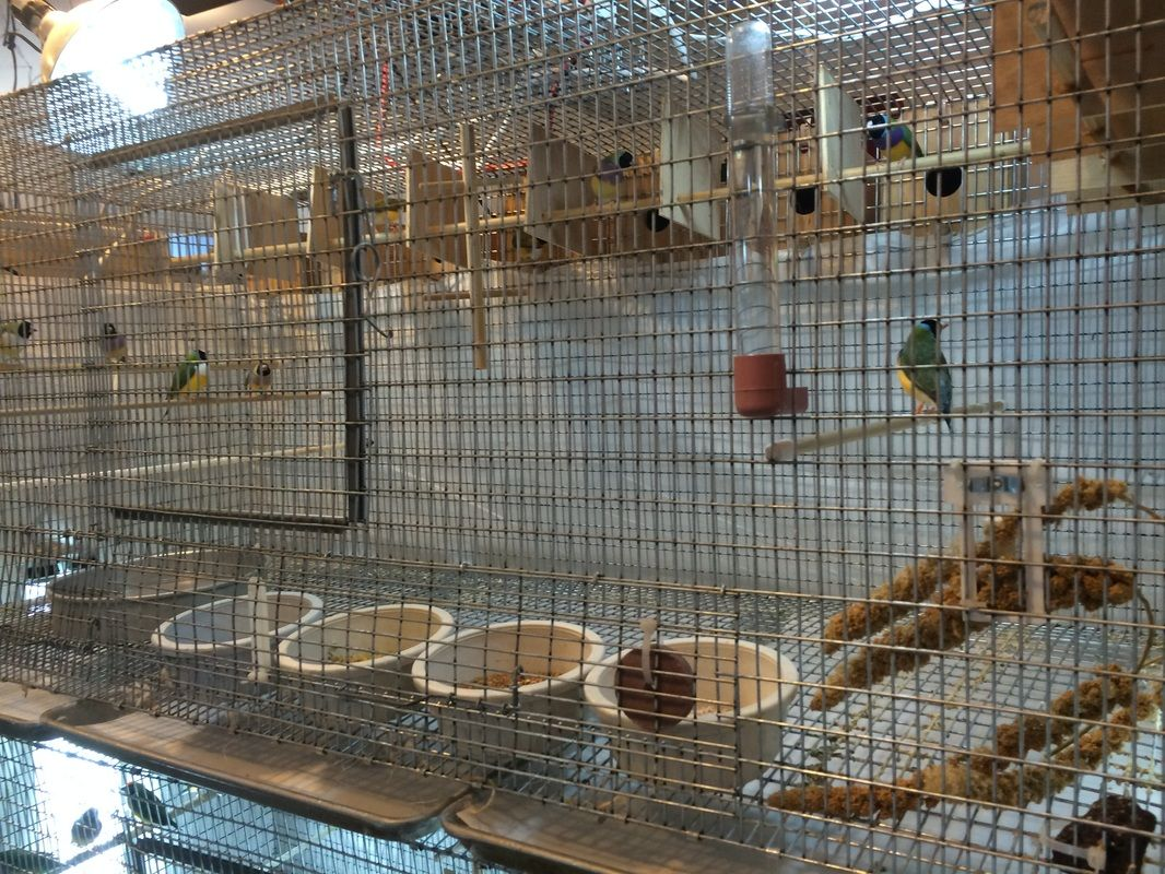 Blog Archives Bird Cages Aviary Beautiful Birds