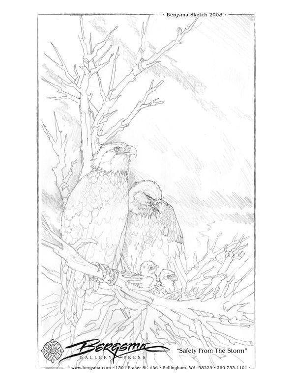 Kleurplaat Roofvogels Nest Kleurplaat Kleurplaten