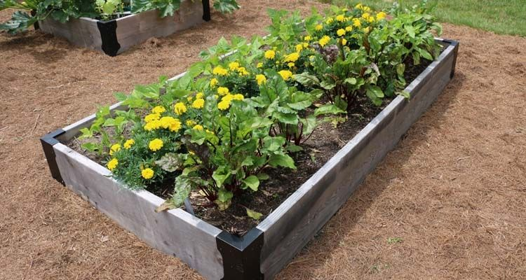 Raised Bed Companion Planting With Beans Beets And 640 x 480