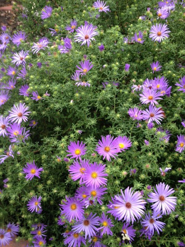Shocking Facts About Plants We Knew It From The Quran About Islam Aster Flower Bee Garden Botanical Terms