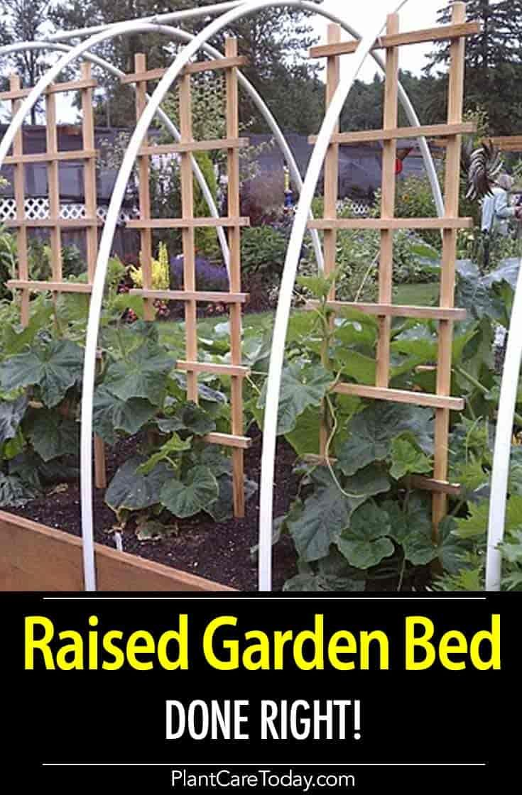 Why This Raised Garden Bed Is Made The Right Way Vertical