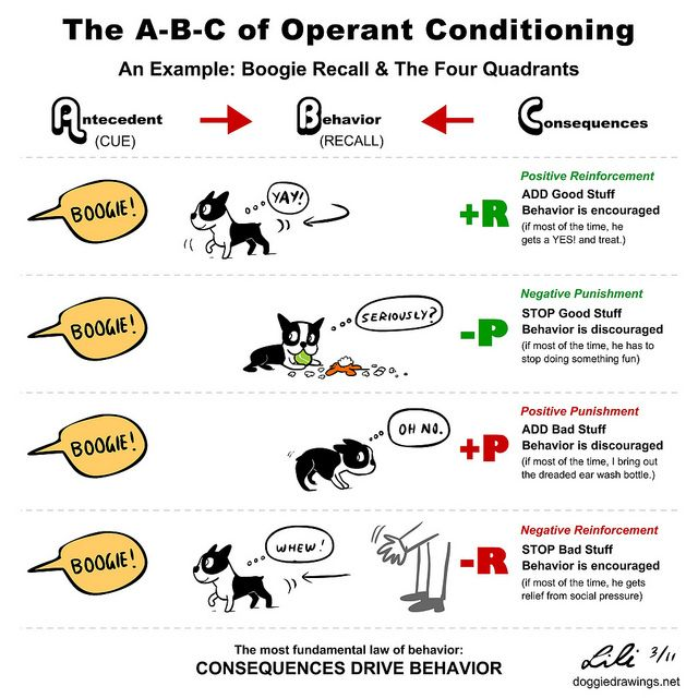 Operant Conditioning Explained With Behavior Example Doggiedrawin