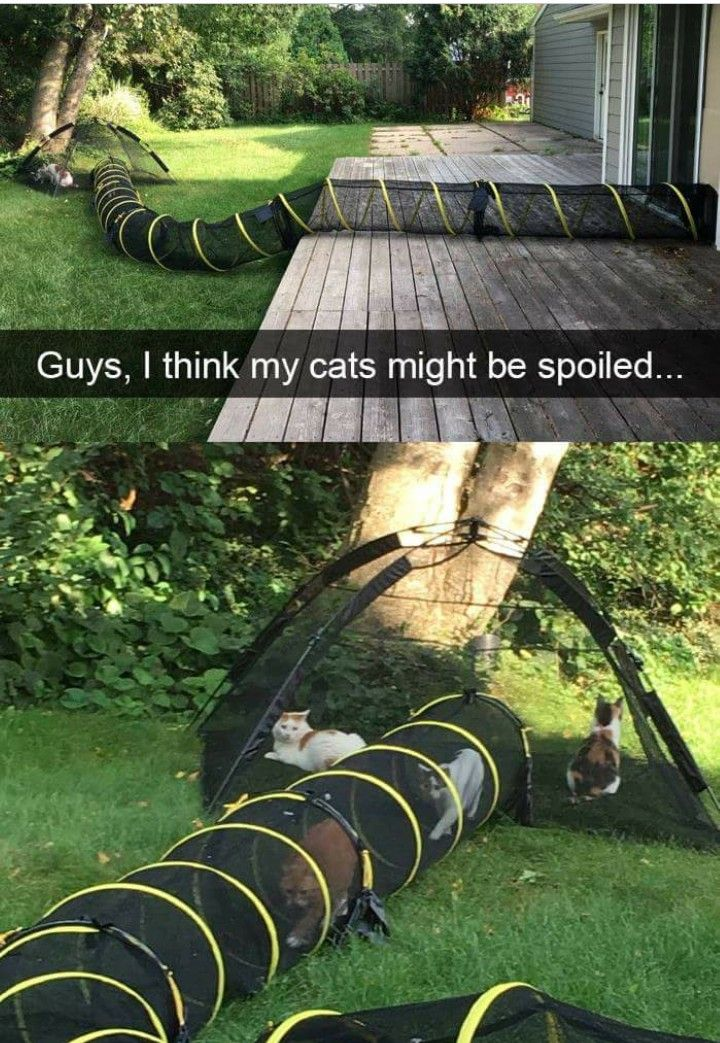 Pin by Heather Glover on Pet stuff Crazy cats, Cat