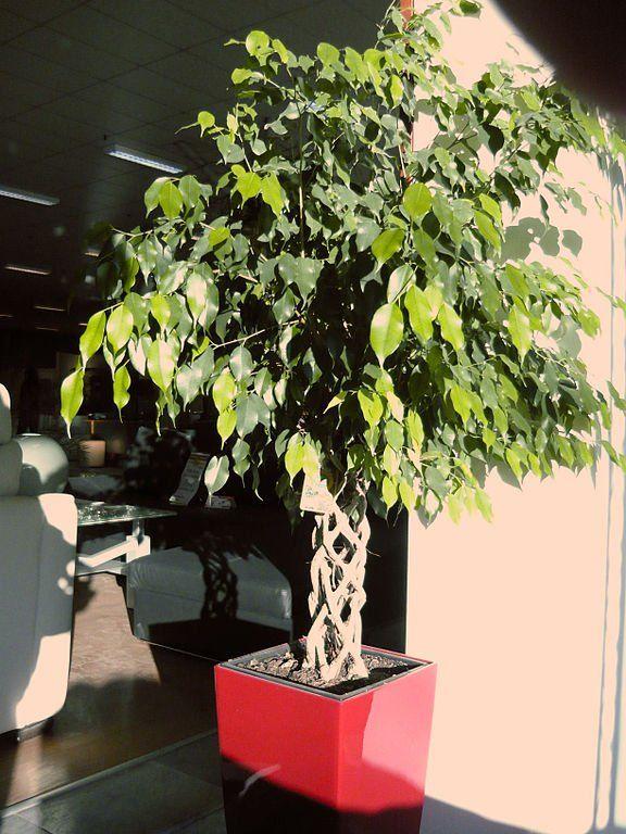 5 plantes mettre dans la chambre pour passer une nuit agr able sant - Plante dans la chambre ...