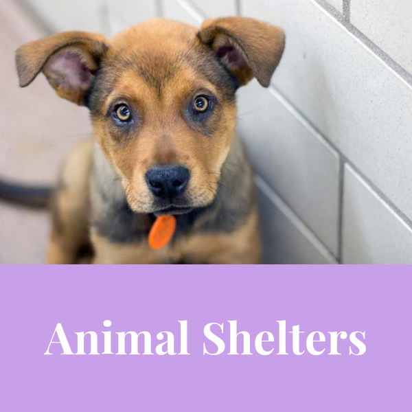 Animals In Shelters Is Better Than In The Streets The Next Step Is To Support Your Local Shelter In Any Way You Animal Reiki Animal Shelter Animals