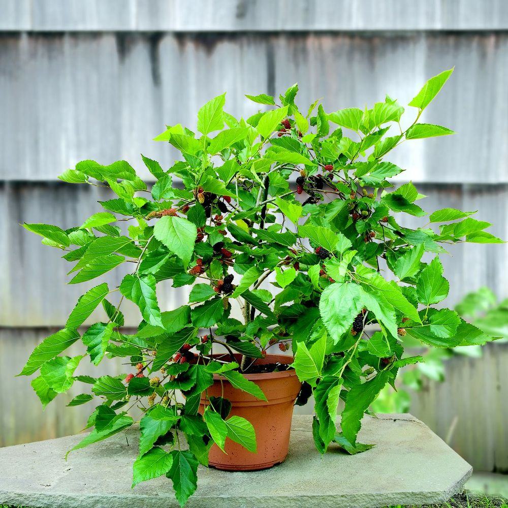 8 Types Of Indoor Fruit Trees You Can Grow In Your Living 400 x 300
