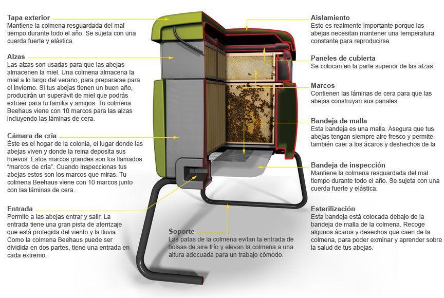 Caracter sticas de nuestra colmena beehaus colmena de for Se puede dividir un piso en dos