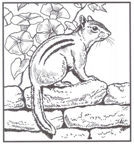 Backyard Animals And Nature Coloring Books Free Coloring Pages Animal Coloring Books Coloring Books Coloring Pages Nature