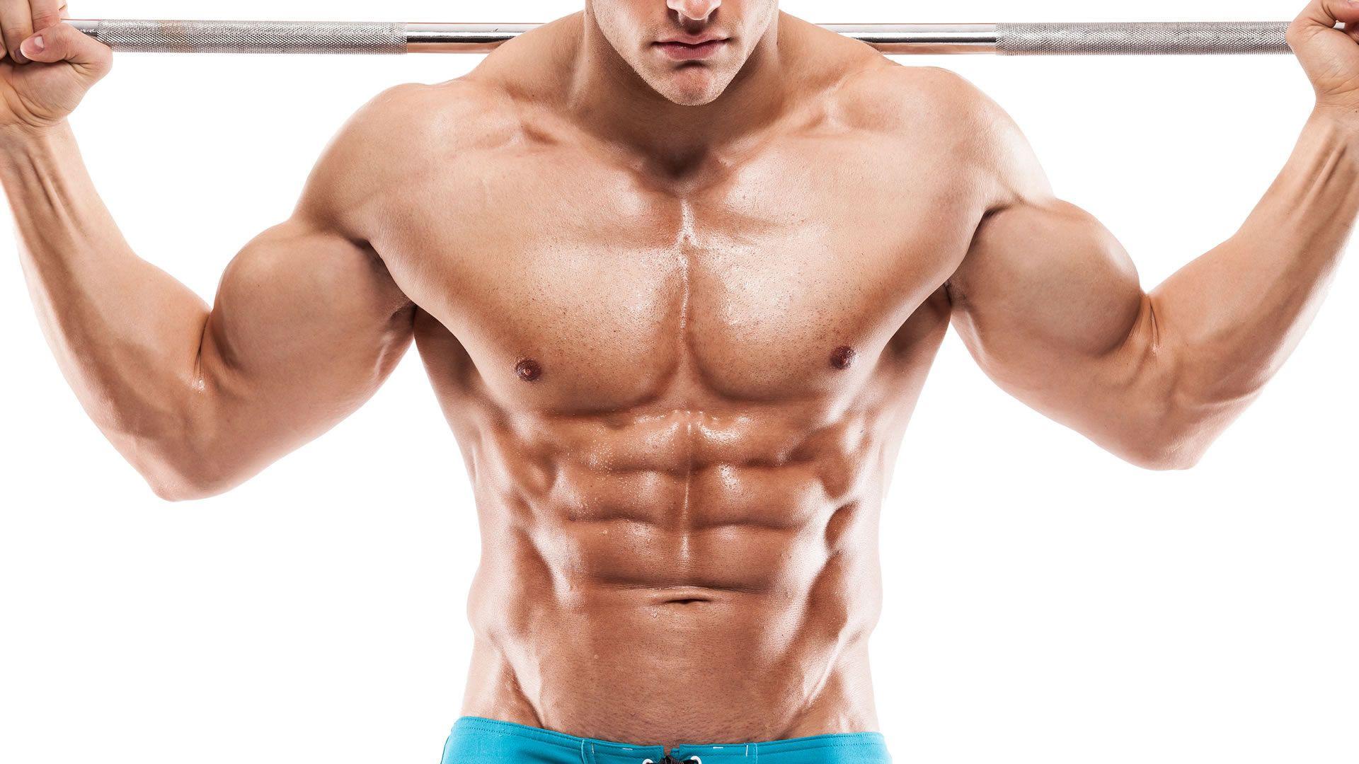Los abdominales se sit an en el abdomen, que es la cavidad que se ...