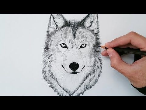 Tutorial De Dibujo Básico El Boceto Avanzado A Lápiz Paso A Paso Youtube Wolf Sketch Drawings Wolf Drawing