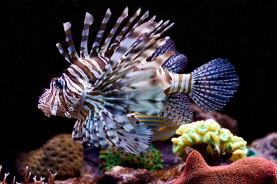 Convert fresh to salt | Aquarium fish, Saltwater fish ...