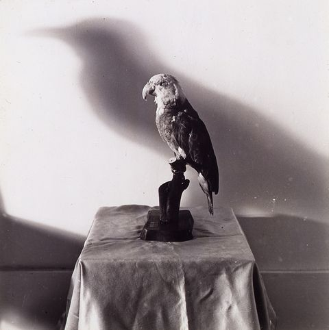 William Wegman, 'Crow,' 1970-didn't know he did anything other than dog photos