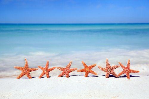 Starfish. Cute.