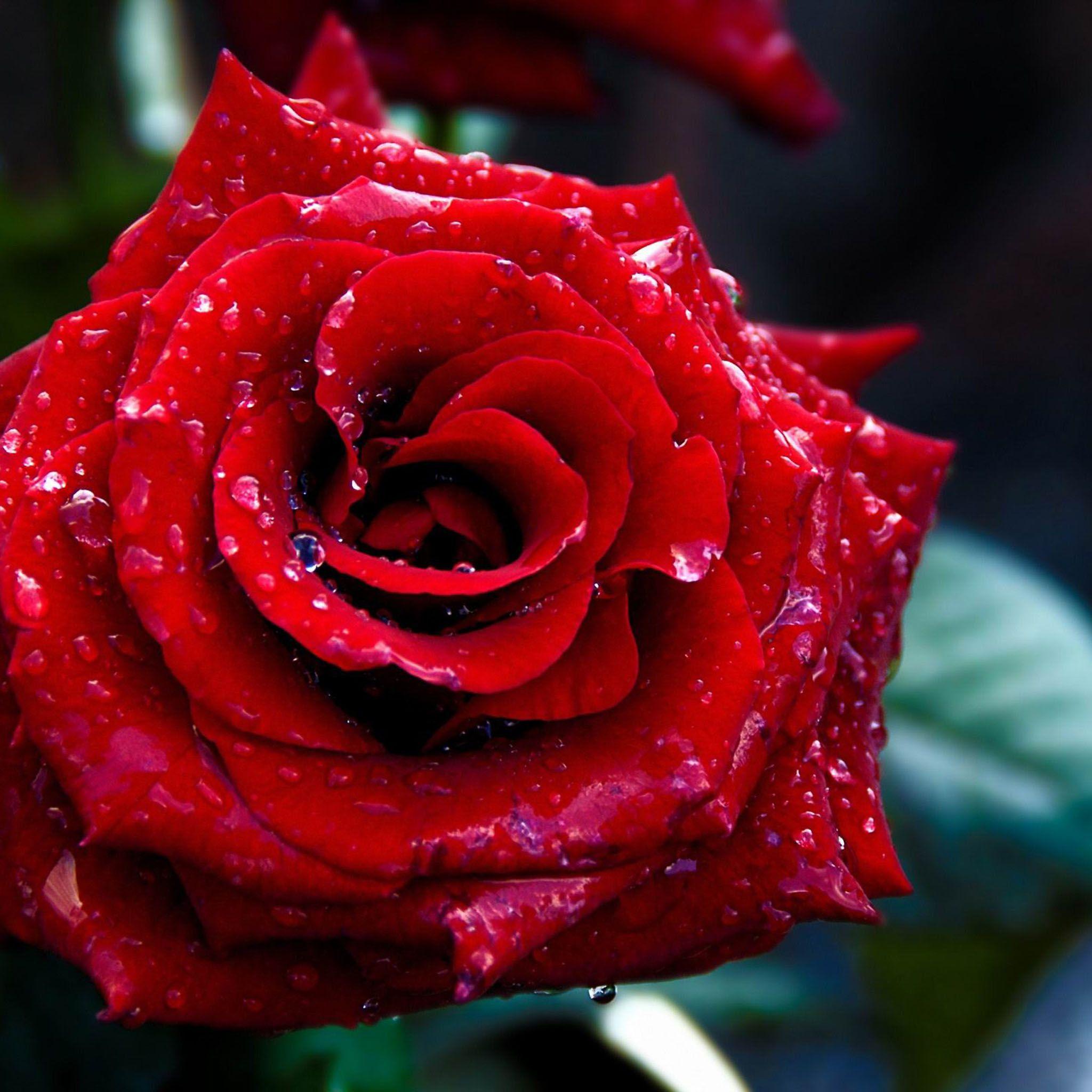 Love Without Eyes Chapter Twenty One Joseyphina S World