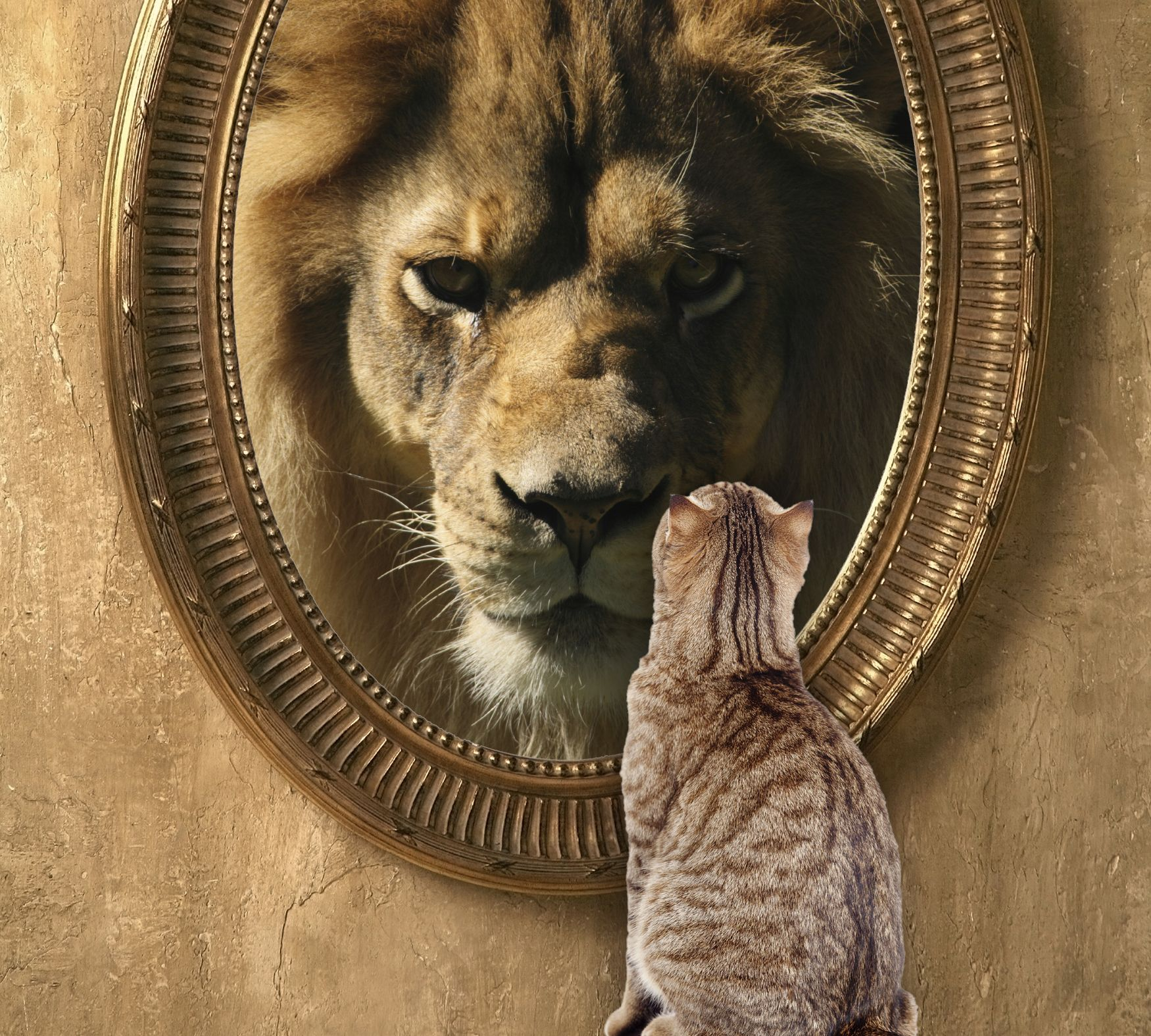 Looking At Yourself Can Be A Big Surprise When You Begin To Open Yourself To The Possibilities On Air Now Animals Good Motivation Cats