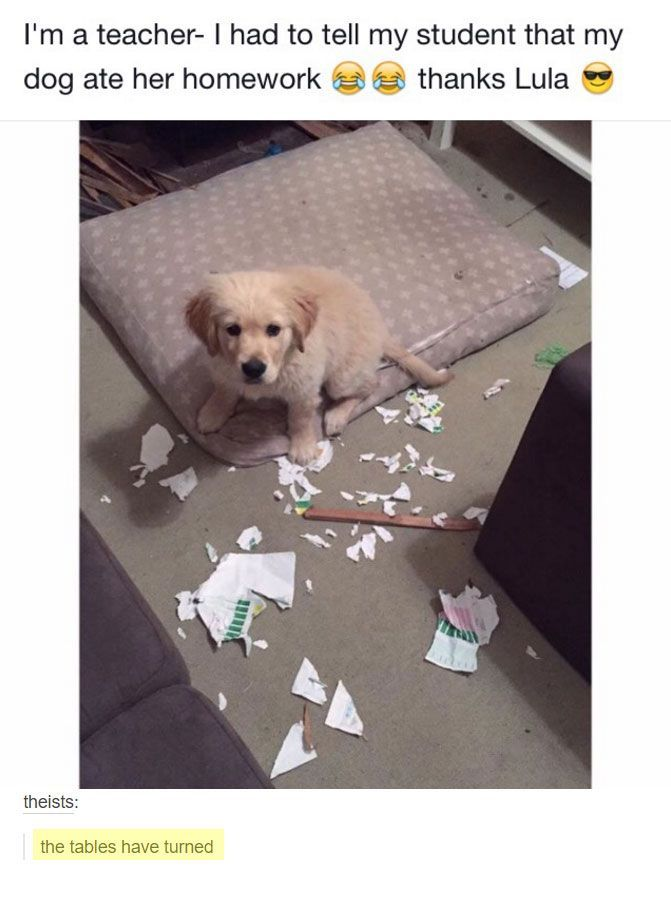 Some Dogs Eat Homework I Need To Get Mine To Eat My Visa Bill