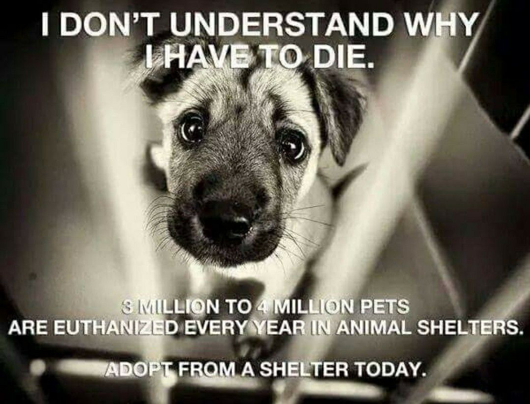 Pin By Angel Seeker On Animal Advocacy Animal Shelter Animal Abuse Rescue Dogs