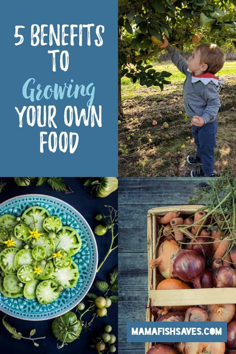 5 Benefits of Growing Your Own Food Grow your own food
