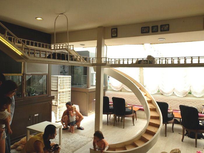 interior cat cafe - Google-søk … | Cat hotel, Pet cafe