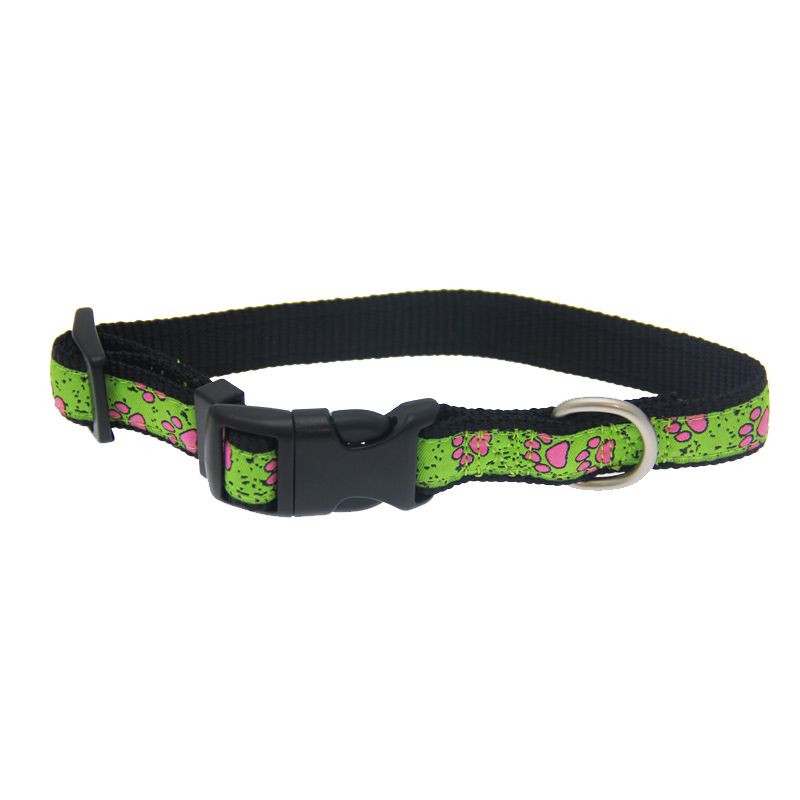 Choice of Colours /& Sizes The Paws Colour Fusion Leather Dog Collar