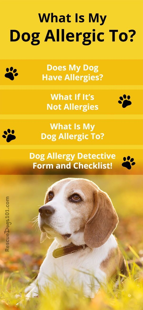 my dog has skin allergies what can i do